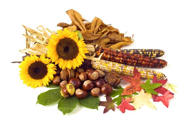 Valokuassa auringonkukkia, maissintähköä ja pähkinöitä.
